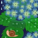 アジサイと雨